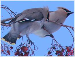 春の 野鳥 の 種類