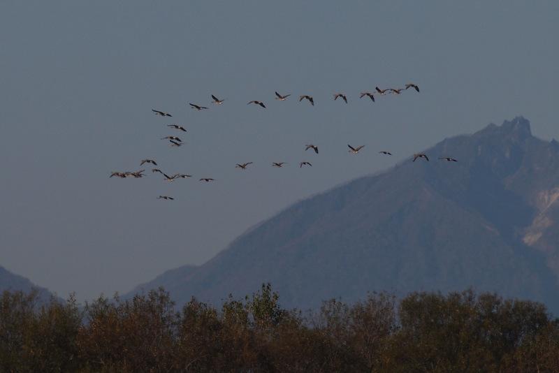 恵庭岳とオオヒシクイ